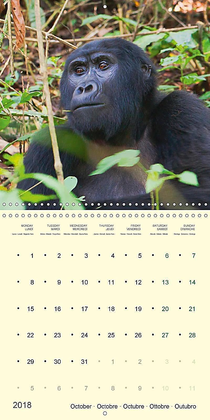 Calendar Uganda : Facing mountain gorillas in uganda wall calendar