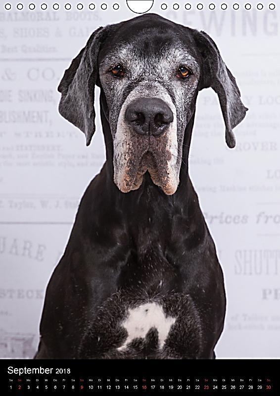 faszination deutsche dogge wandkalender 2018 din a4 hoch. Black Bedroom Furniture Sets. Home Design Ideas
