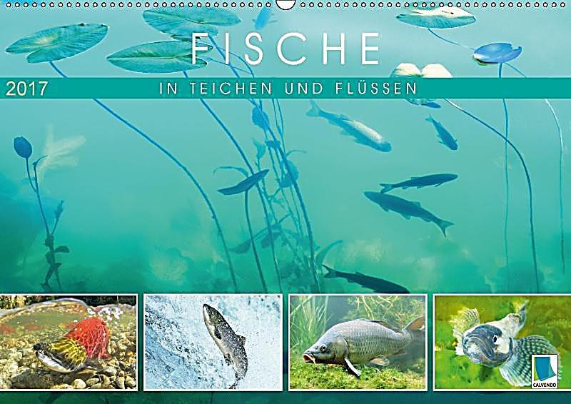 Fische in teichen und fl ssen wandkalender 2017 din a2 for Fische in teichen