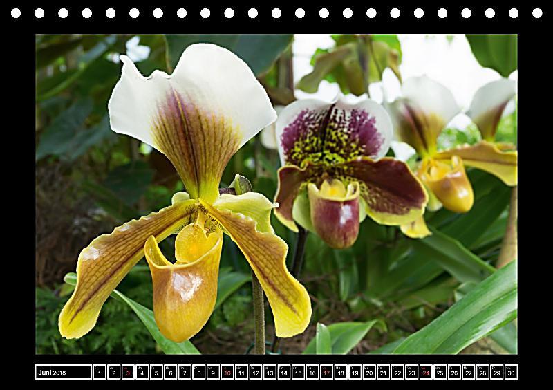 frauenschuhe die sch nsten orchideen der welt. Black Bedroom Furniture Sets. Home Design Ideas