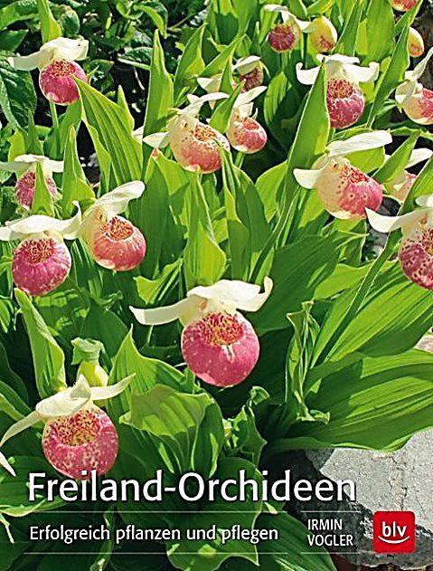 freiland orchideen buch von irmin vogler portofrei. Black Bedroom Furniture Sets. Home Design Ideas
