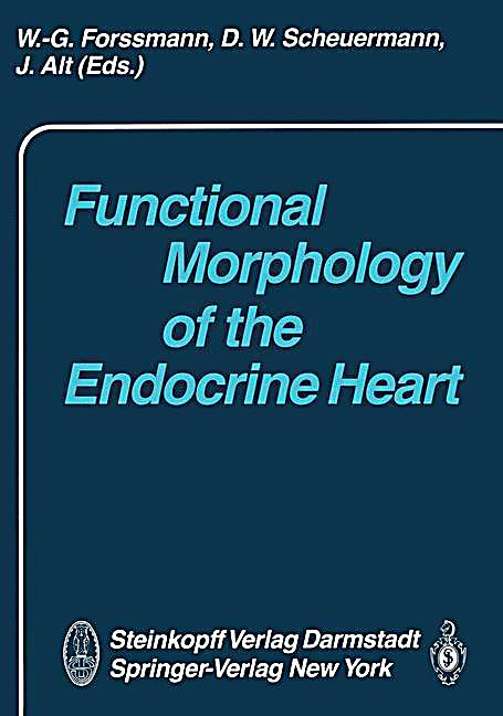 morphology of the heart Torrent guasp's theory of heart function is based on grouping the muscle fibers   with a specific morphology that is sufficiently rigid to facilitate the bolus effect.