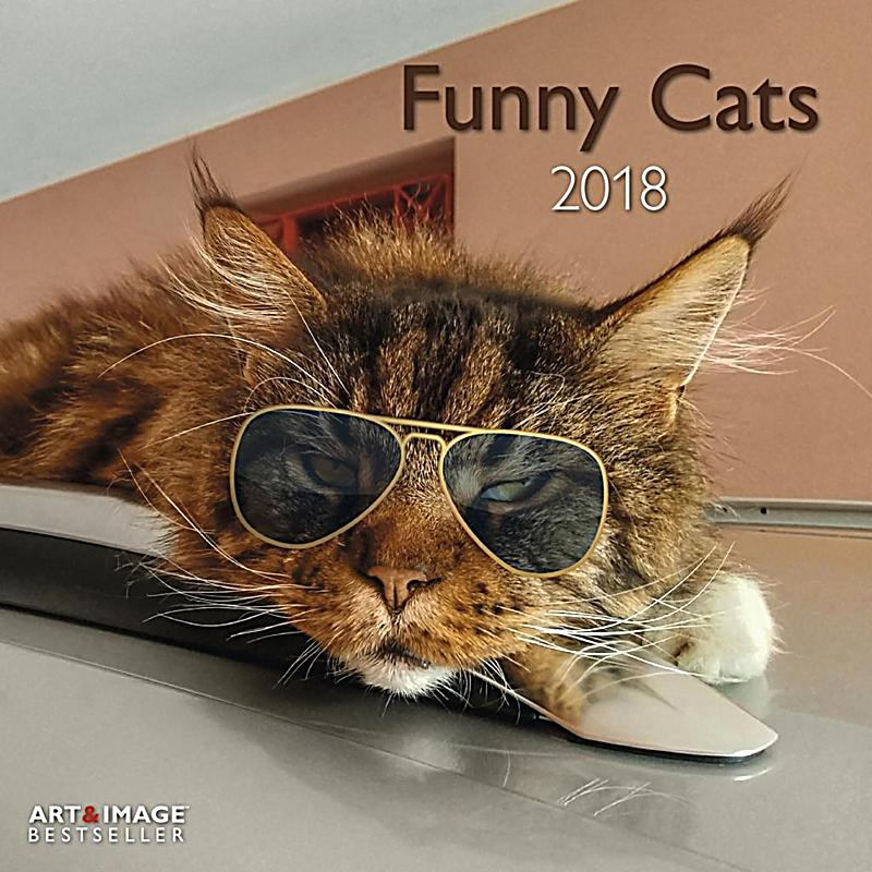 Funny cat commercials 2018 / Bee icon league wikipedia