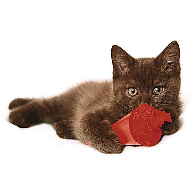 Funny Cats 2018 - Kalender günstig bei Weltbild.at bestellen Funny Cat Videos 2018