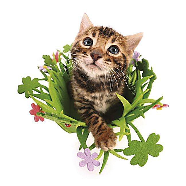 Funny Cats 2018 - Kalender günstig bei Weltbild.de bestellen Funny Cat Videos 2018