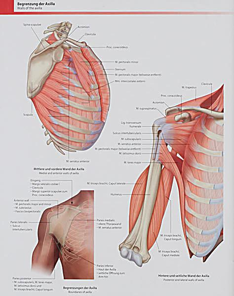 Gray\'s Atlas der Anatomie Buch portofrei bei Weltbild.at