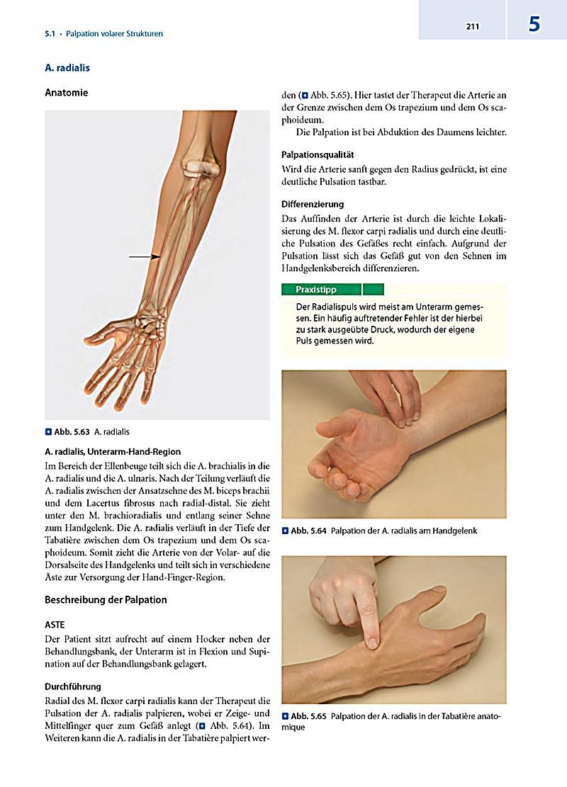 Großartig Hand Und Unterarm Anatomie Zeitgenössisch - Anatomie Ideen ...