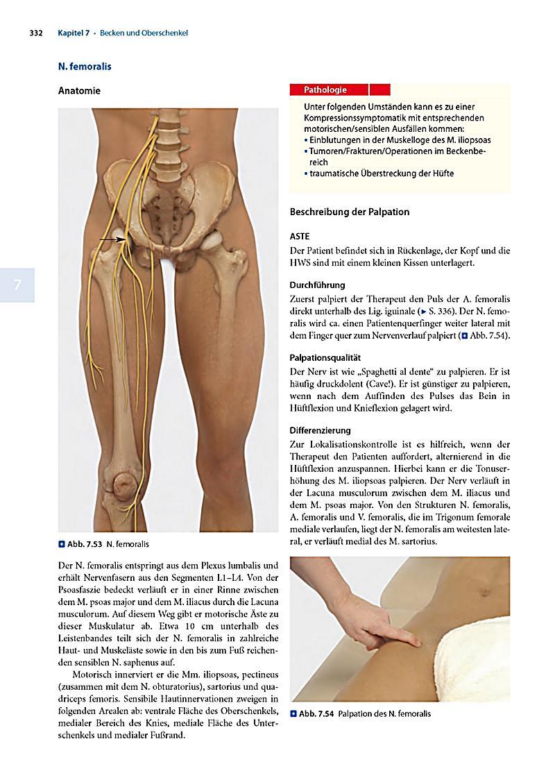 Atemberaubend Beinarterienanatomie Bilder - Menschliche Anatomie ...