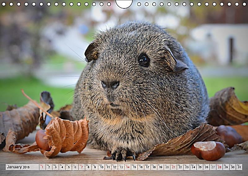 guinea kalender 2018 takvim kalender hd