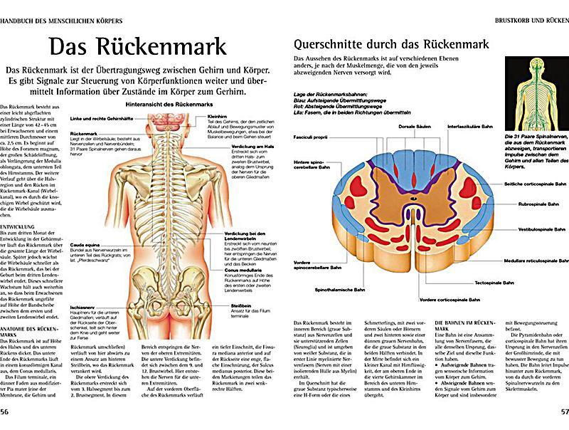 Handbuch des Menschlichen Körpers Buch bei Weltbild.de bestellen
