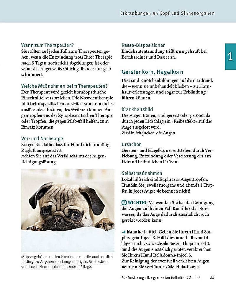 Hunde Buch von Petra Stein jetzt online bei Weltbild.ch bestellen