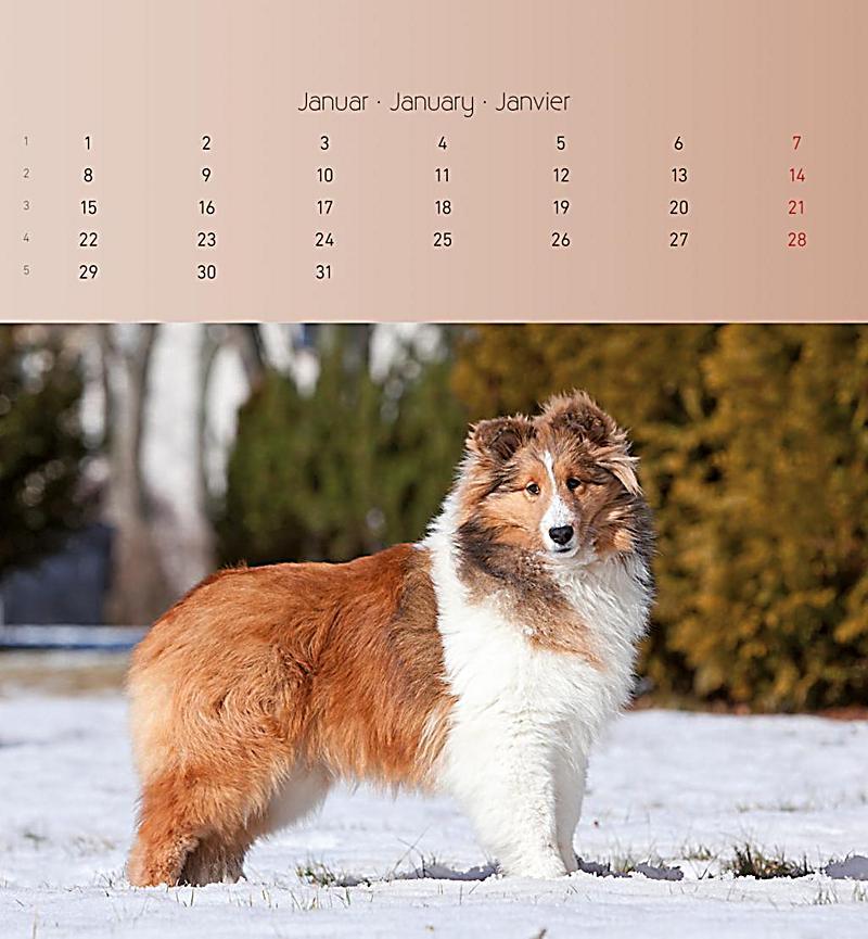 hunde 2018 postkartenkalender kalender bei. Black Bedroom Furniture Sets. Home Design Ideas