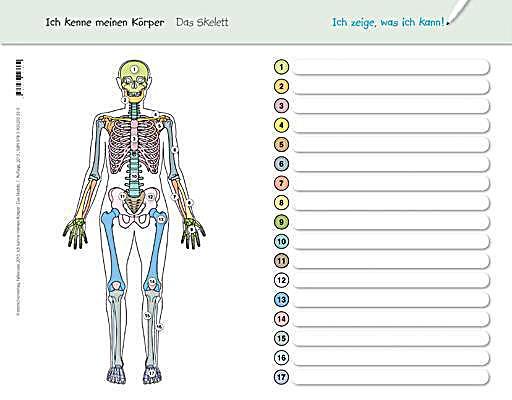 ich kenne meinen k rper das skelett buch. Black Bedroom Furniture Sets. Home Design Ideas