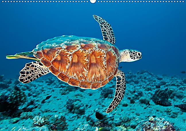 In der Schwebe - Meeresschildkröten Posterbuch DIN A3 quer | Weltbild.ch