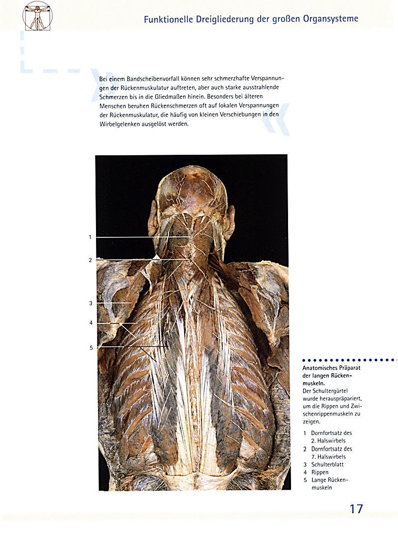 Innenansichten des menschlichen Körpers Buch portofrei kaufen