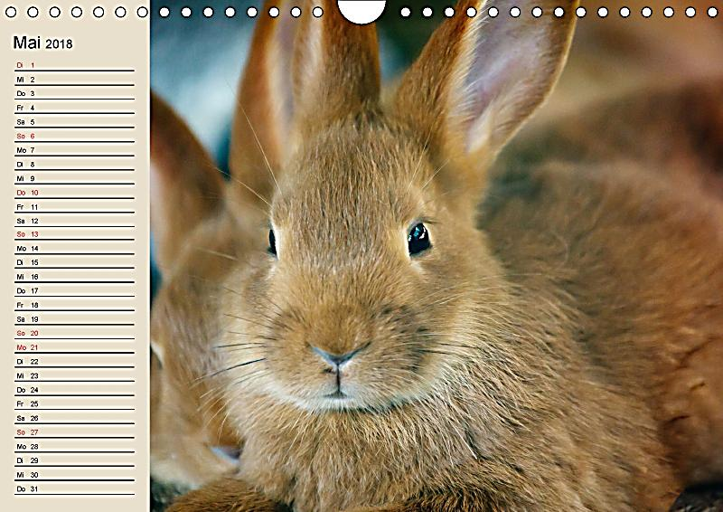 kaninchen und hasen wandkalender 2018 din a4 quer dieser erfolgreiche kalender wurde dieses jahr. Black Bedroom Furniture Sets. Home Design Ideas
