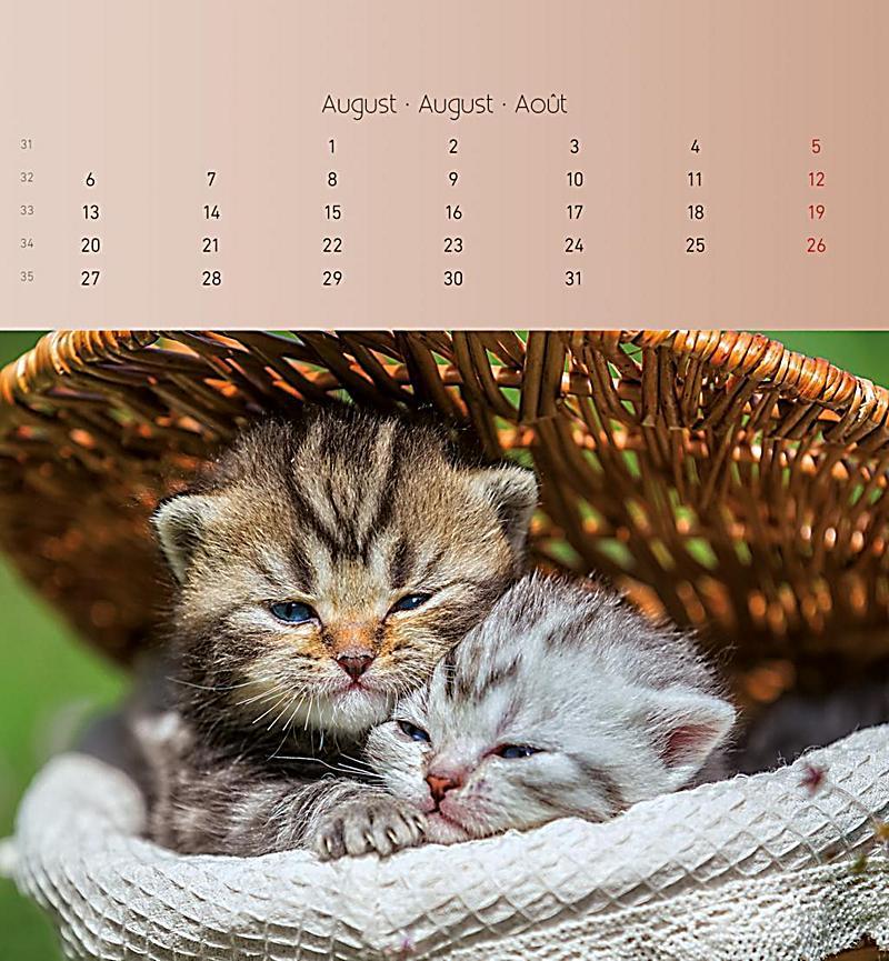 katzen 2018 postkartenkalender kalender bei. Black Bedroom Furniture Sets. Home Design Ideas