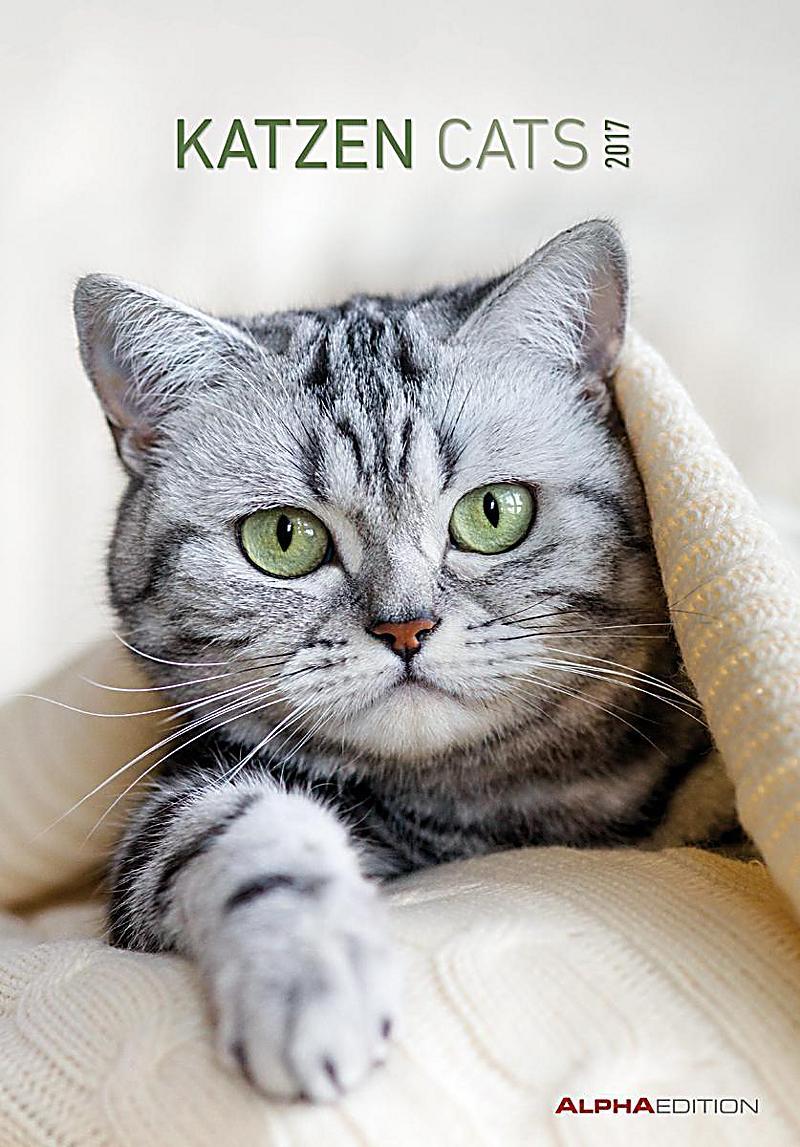 katzen cats 2017 kalender g nstig bei bestellen. Black Bedroom Furniture Sets. Home Design Ideas