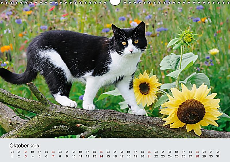 katzen im garten wandkalender 2018 din a3 quer kalender. Black Bedroom Furniture Sets. Home Design Ideas
