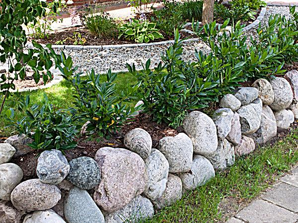 kirschlorbeerhecke 3 pflanzen topfgewachsen. Black Bedroom Furniture Sets. Home Design Ideas