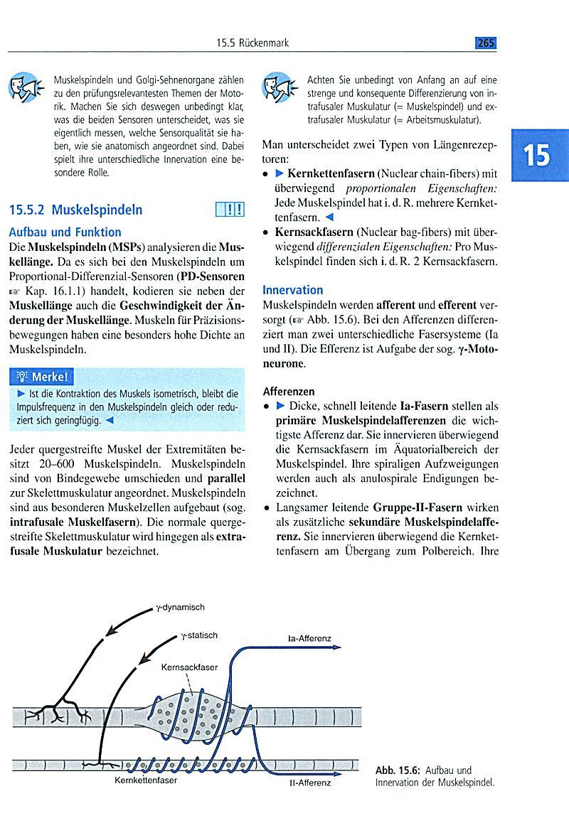 Schön Kapitel 6 Allgemeine Anatomie Und Physiologie Fotos ...