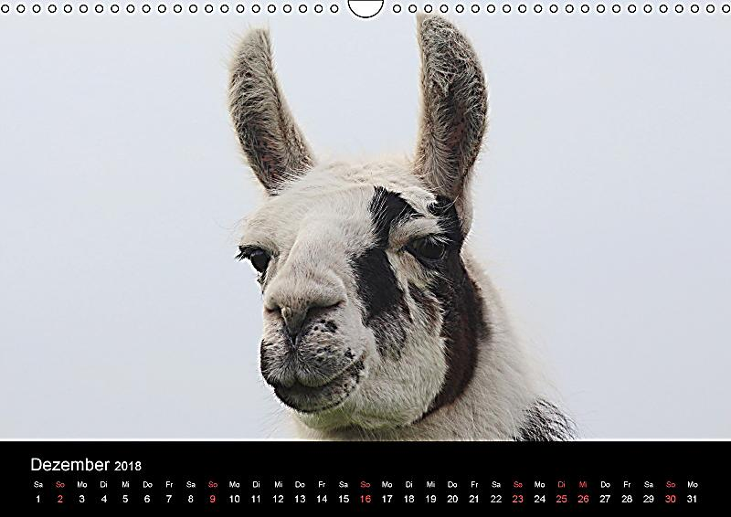Lama-Kalender 2018 Wandkalender 2018 DIN A3 quer - Kalender bestellen