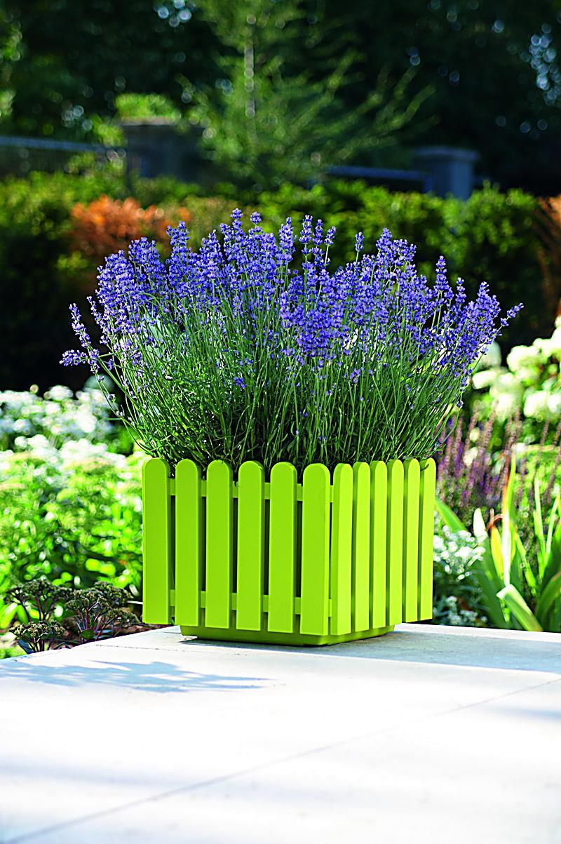 landhaus quadratkasten gr n 38x38 plus 5 lavendel pflanzen. Black Bedroom Furniture Sets. Home Design Ideas
