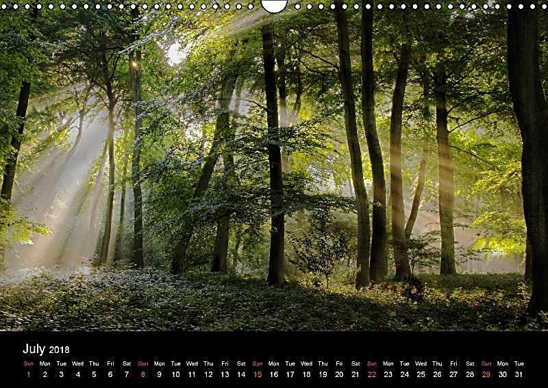Calendar Woodlands : Magical woodlands wall calendar din a landscape