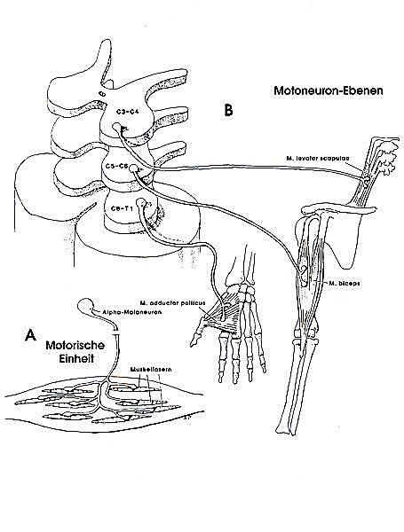 Malbuch Neuroanatomie Buch jetzt bei Weltbild.de online bestellen