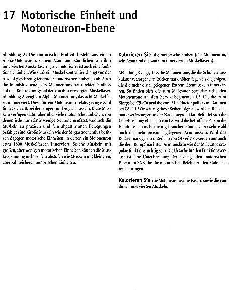Niedlich Wynn Kapit Anatomie Malbuch Bilder - Ideen färben ...