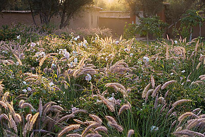 Mediterranes gartendesign buch portofrei bei for Gartendesign