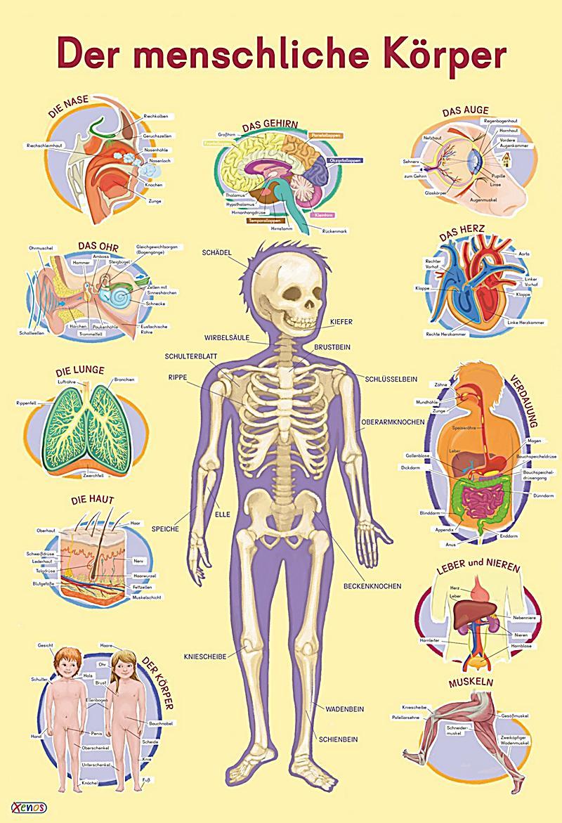 Arbeitsblatt Meine Weihnachtsferien : Mein lernposter der menschliche körper buch weltbild