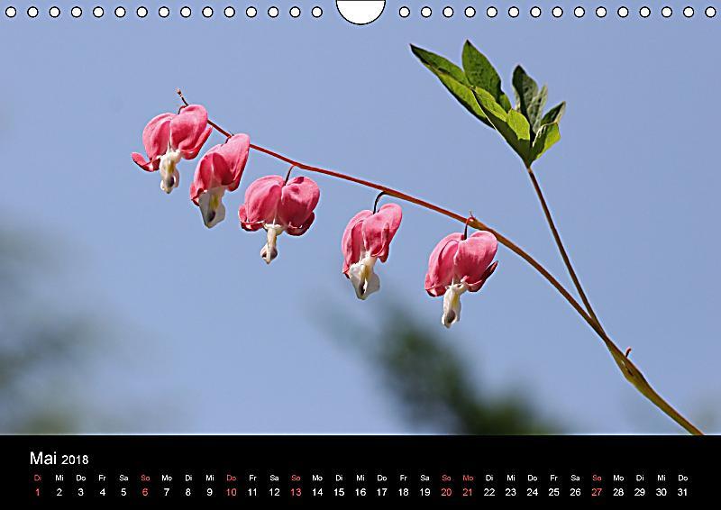 Meine blumen spiegel der seele wandkalender 2018 din a4 for Der spiegel bestellen
