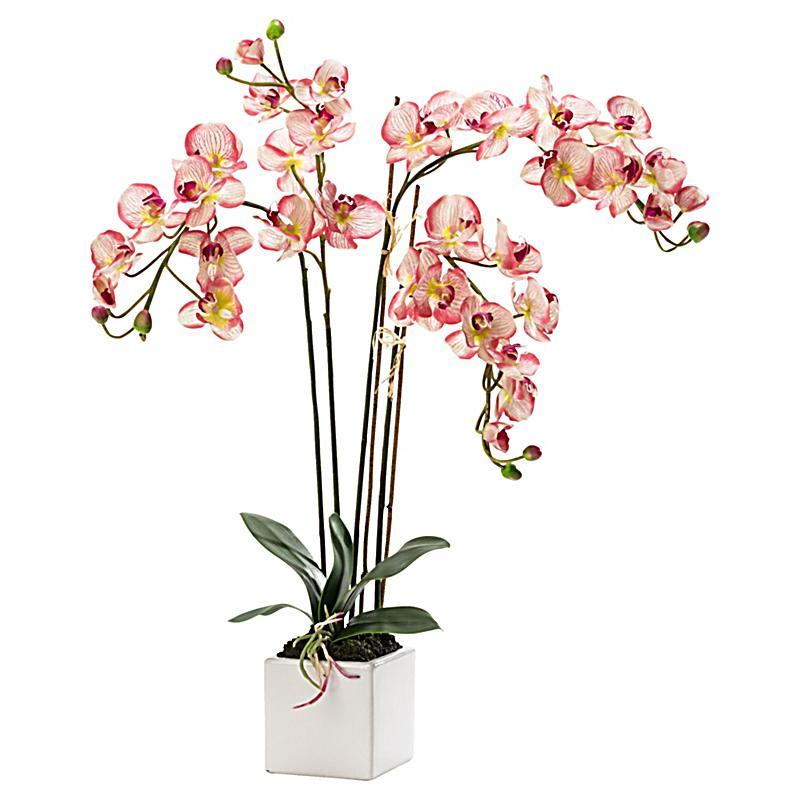 Miavilla Kunstpflanze Orchidee Jetzt Bei Bestellen