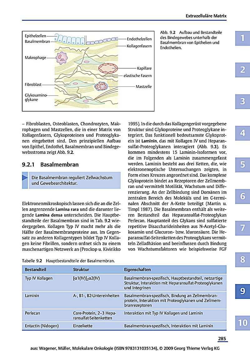 download king richard ii websters german thesaurus edition 2006
