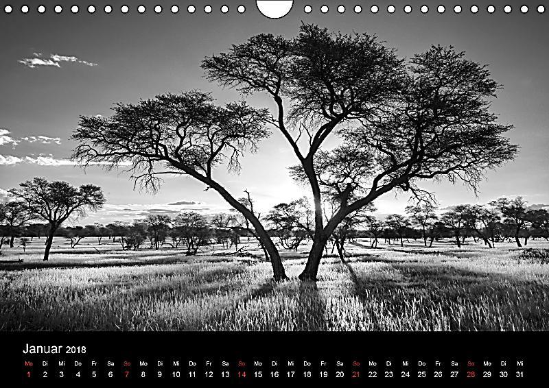 namibias b ume in schwarzwei wandkalender 2018 din a4 quer kalender bestellen. Black Bedroom Furniture Sets. Home Design Ideas