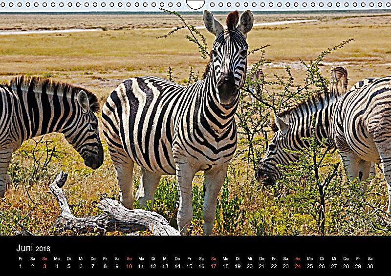 namibias tiere von gro bis klein wandkalender 2018 din a3 quer kalender bestellen. Black Bedroom Furniture Sets. Home Design Ideas