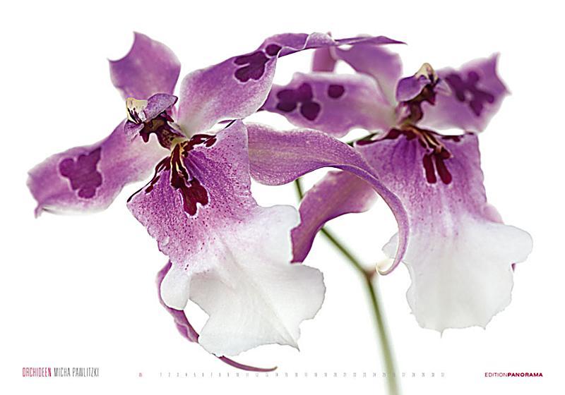 orchideen kalender jetzt g nstig bei bestellen. Black Bedroom Furniture Sets. Home Design Ideas