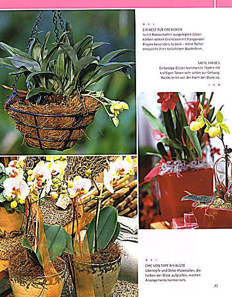 ... Orchideen   Produktdetailbild 4 ...