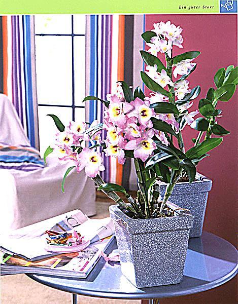 ... Orchideen   Produktdetailbild 3 ...