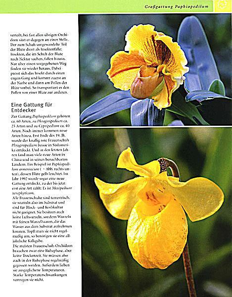 ... Orchideen   Produktdetailbild 5 ...