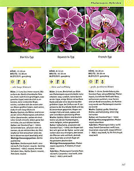 ... Produktdetailbild 5; Orchideen   Produktdetailbild 6