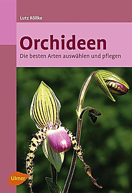 orchideen buch von lutz r llke jetzt bei bestellen. Black Bedroom Furniture Sets. Home Design Ideas