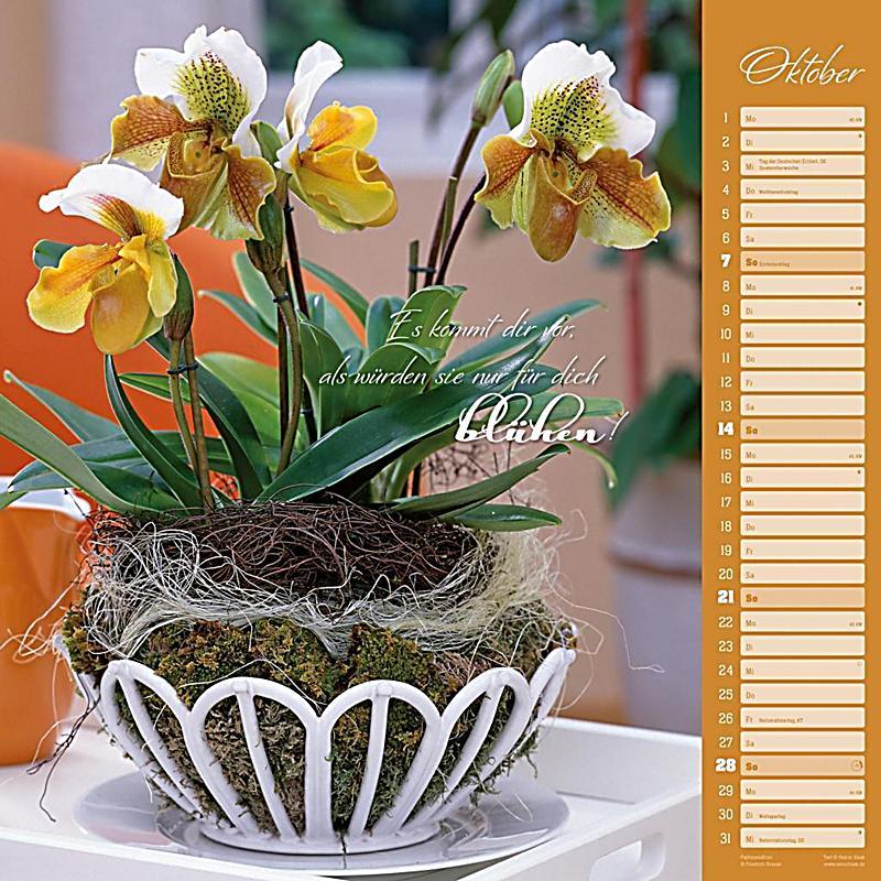 orchideen 2018 kalender jetzt g nstig bei. Black Bedroom Furniture Sets. Home Design Ideas