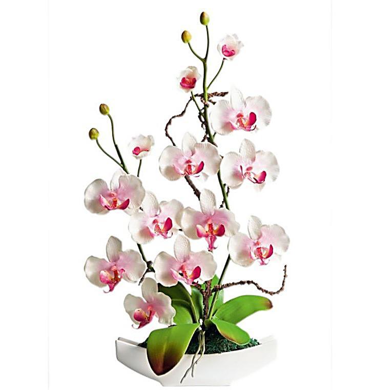 Orchideen arrangement jetzt bei bestellen - Orchideen arrangement ...