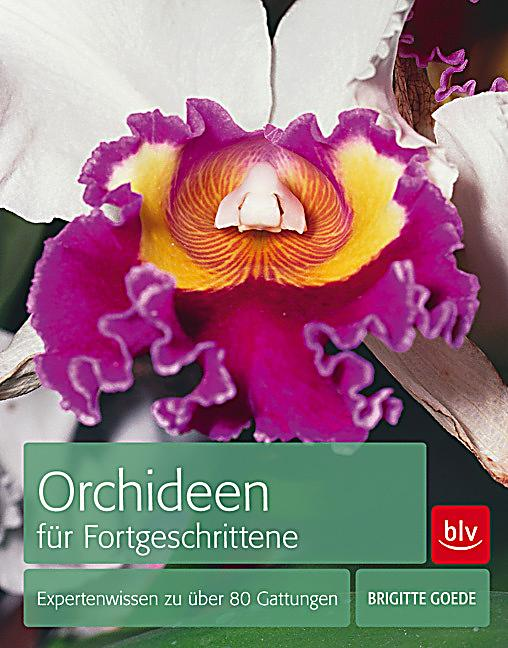 orchideen f r fortgeschrittene buch portofrei bei. Black Bedroom Furniture Sets. Home Design Ideas