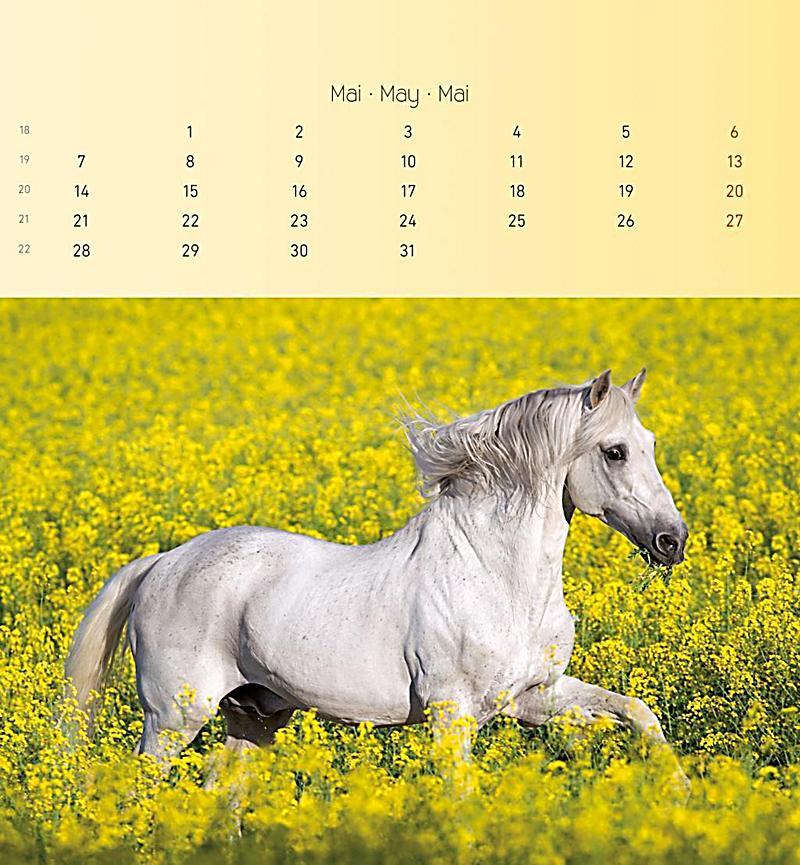 pferde 2018 postkartenkalender kalender bei. Black Bedroom Furniture Sets. Home Design Ideas