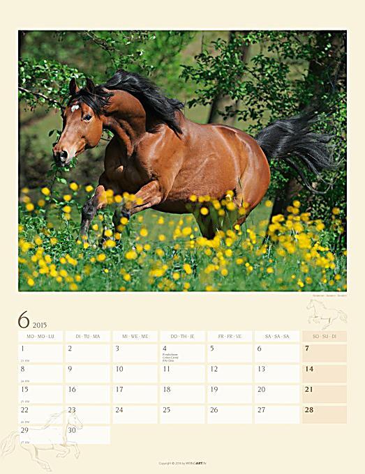 pferde sch nheit und eleganz 2015 kalender bei. Black Bedroom Furniture Sets. Home Design Ideas