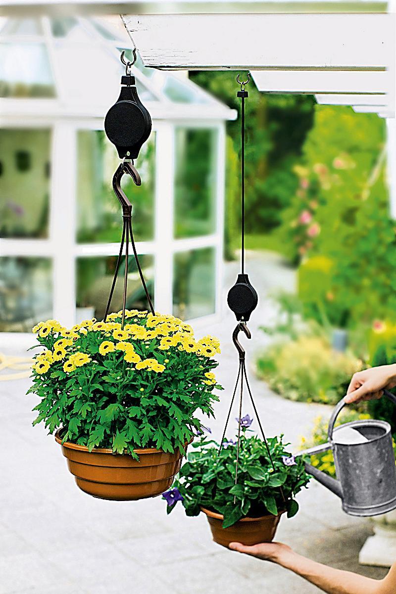 Pflanzen lift jetzt bei bestellen for Pflanzen bestellen schweiz