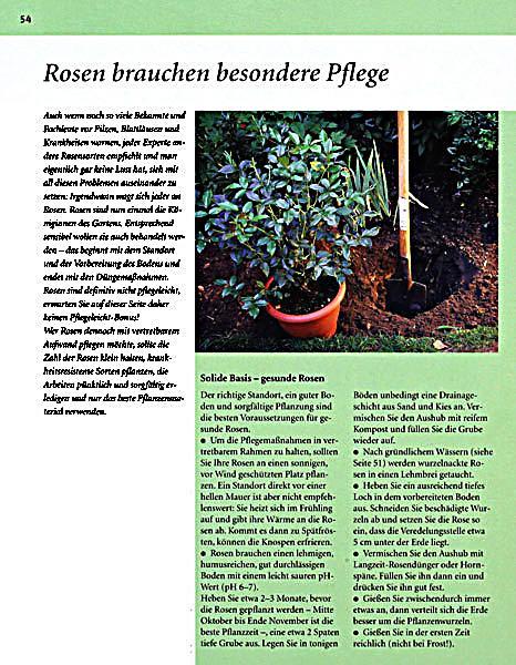 Pflegeleichter Garten Wolfgang Hensel : Pflegeleichter Garten Buch portofrei bei Weltbildat bestellen